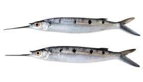 2 игл-рыбы Стоковые Изображения