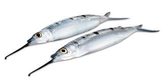 Игл-рыбы Стоковое фото RF