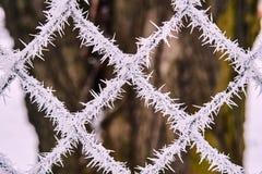 Иглы льда Стоковые Фото