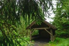 иглы spruce Деревянное газебо в coniferous лесе Стоковые Изображения