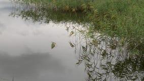 Идеальное пятно на пруде рыболовной удочки акции видеоматериалы