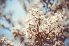 Дерево цветков стоковое изображение