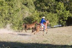 идет лошадь немногая Стоковое Изображение RF