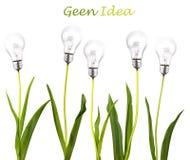 идея принципиальной схемы зеленая Стоковое Изображение RF