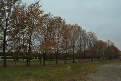 Идилличная сцена в парке с деревьями и упаденными листьями вокруг Стоковые Фото