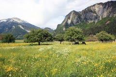 идилличное лето пейзажа Стоковые Изображения