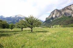 идилличное лето пейзажа стоковая фотография rf