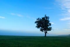идилличное утро ландшафта стоковая фотография rf
