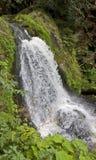 идилличные водопады triberg стоковое изображение rf