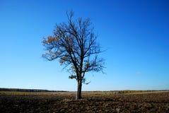 идилличный дуб ландшафта стоковая фотография