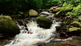 Идилличный поток горы в зеленом лесе с папоротниками на речном береге сток-видео