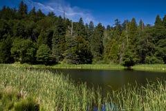 идилличный пруд ii Стоковое фото RF