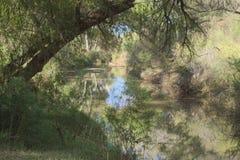 483 идилличный Riparian пейзаж San Pedro Аризона стоковые изображения