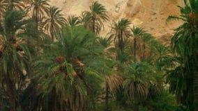 Идите дождь в оазисе финиковых пальм Сахары Tamaqzah Туниса сток-видео