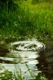 Идите дождь падать в лужицу и круги на воде Стоковое Изображение