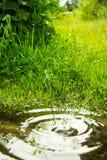 Идите дождь падать в лужицу и круги на воде Стоковые Изображения