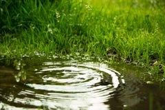 Идите дождь падать в лужицу и круги на воде Стоковая Фотография