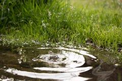 Идите дождь падать в лужицу и круги на воде Стоковые Фотографии RF