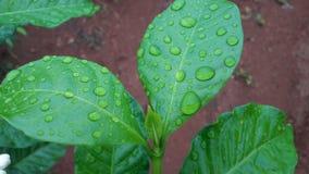 Идите дождь падение стоковая фотография rf