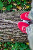 Идите на упаденное дерево, красные ботинки на хоботе стоковое фото rf