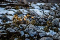 идите снег в горах, снеге на камне, ландшафтах зимы, горах зимы Стоковые Изображения
