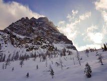 Идти в горы в середине гор между соснами и елями Стоковые Фото
