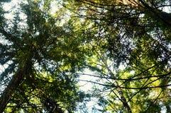 Идти в древесину утра лета леса стоковая фотография rf