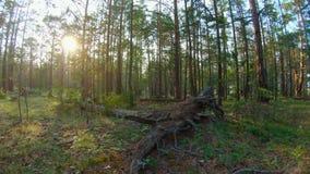 Идти в лес видеоматериал