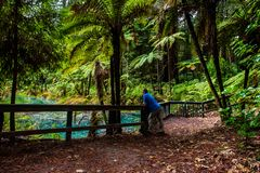 Идти в лес Redwoods - Rotorua стоковое фото