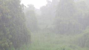 Идти дождь день видеоматериал