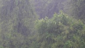 Идти дождь день акции видеоматериалы