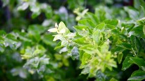 Идти дождь падение на свежих зеленых листьях сток-видео