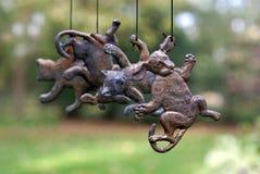 идти дождь собак котов Стоковые Фотографии RF