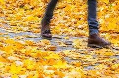 Идти на предпосылку парка осени Стоковое Изображение