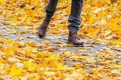 Идти на предпосылку парка осени Стоковые Изображения RF