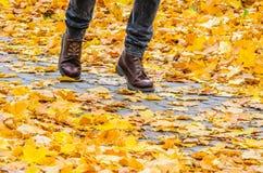 Идти на предпосылку парка осени Стоковые Фото