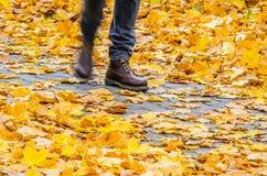 Идти на предпосылку парка осени Стоковые Фотографии RF