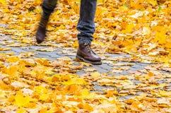 Идти на предпосылку парка осени Стоковая Фотография
