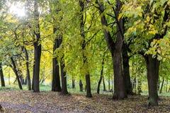 Идти через город осени Стоковая Фотография RF