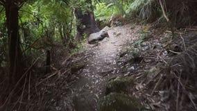 Идти через тропические джунгли в выпускном вечере Wilsons в Австралии видеоматериал