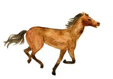 Идущая лошадь Стоковые Изображения