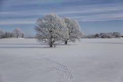 Идущие dogoaks в статуэтке украшений зимы Стоковое фото RF