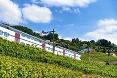 Идущий поезд в тропе террас виноградника Lavaux швейцарца Стоковые Изображения