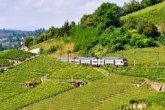 Идущий поезд на тропе террас виноградника Lavaux в Швейцарии Стоковые Изображения RF