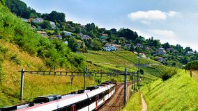 Идущий поезд на тропе террас виноградника Lavaux швейцарца Стоковое Фото