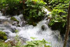 идущий поток Стоковые Фото