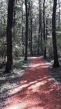 Идущий след в дне осени Стоковые Фотографии RF