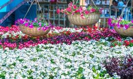 Идя Новый Год утра улицы лунный в центре города при цветки украшенные вдоль улицы Стоковое Фото