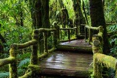 Идя предпосылка дождевого леса следа с зелеными мхами и папоротником Стоковое фото RF