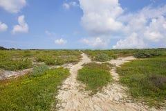 Идя пути на сухом Tortugas Стоковое Изображение RF